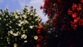 tarascon-flowers-1.jpg